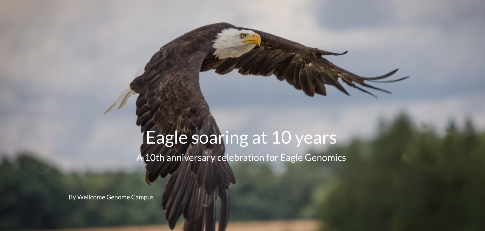 Eagle at 10